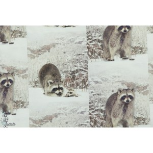 Tissu jersey Stenzo Raccoon - raton laveur