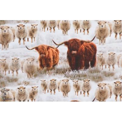 jersey Bio Highland Cattle by Ernst vache campagne animaux ecosse ferme garçon